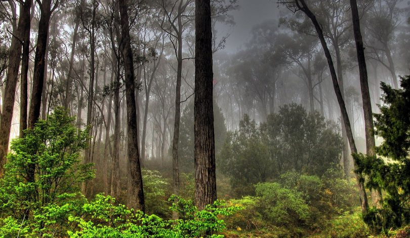 forests-photos-1920x1200-0019